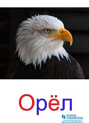 Карточки Домана птицы