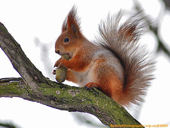 http://www.tvoyrebenok.ru/images/animals/114.1.jpg