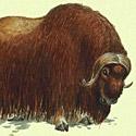 Интересные факты о животных тундры