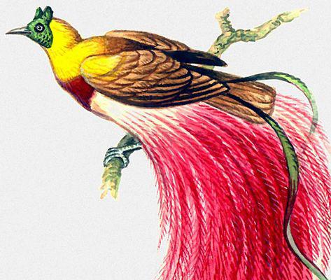Райских птиц над моей головой.  Мне бы голову положить.  И чтоб камень с души упал.  На траву и услышать пение.