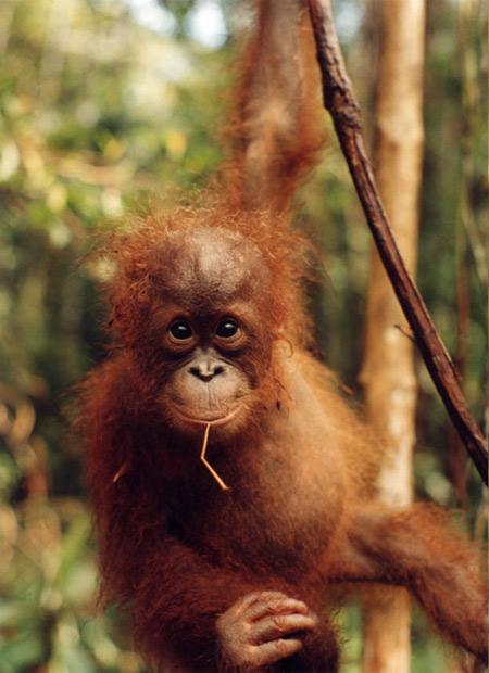 Пояса джунглей и тропических лесов