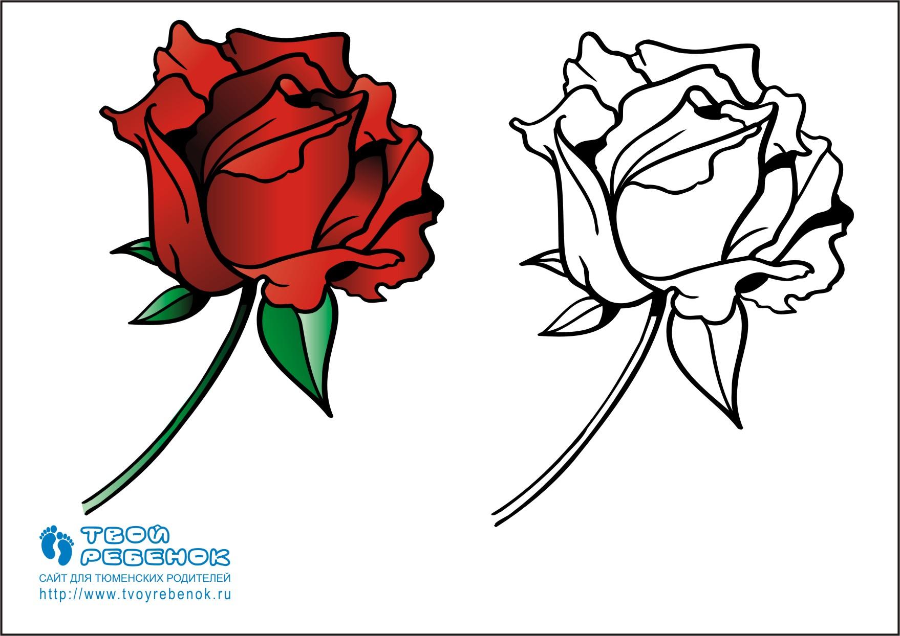 Раскраска роза для детей скачайте