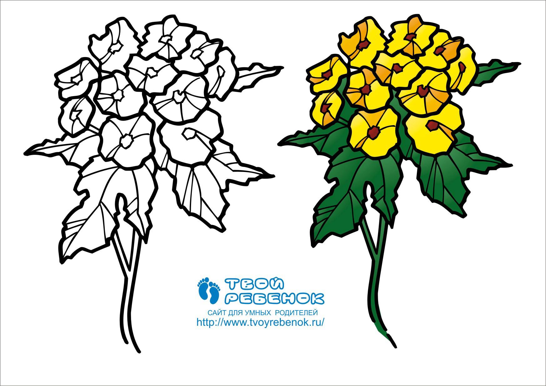 Раскраски цветов для детей в цвете