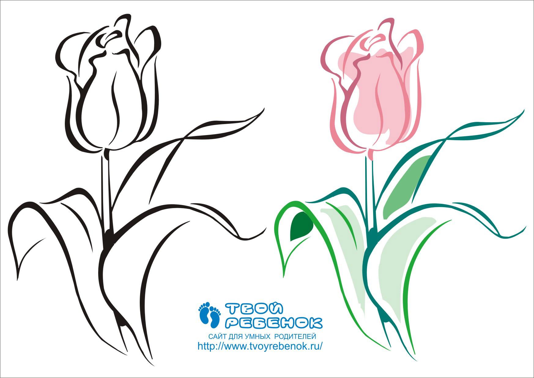 Раскраски цветов бесплатно на цветном