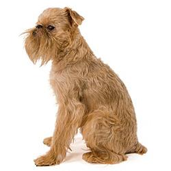 Полный список пород собак со всеми характеристиками