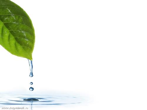 Фоны презентации по экологии