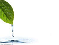 Фоны презентаций по экологии