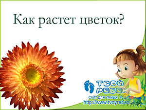 Как растет цветок