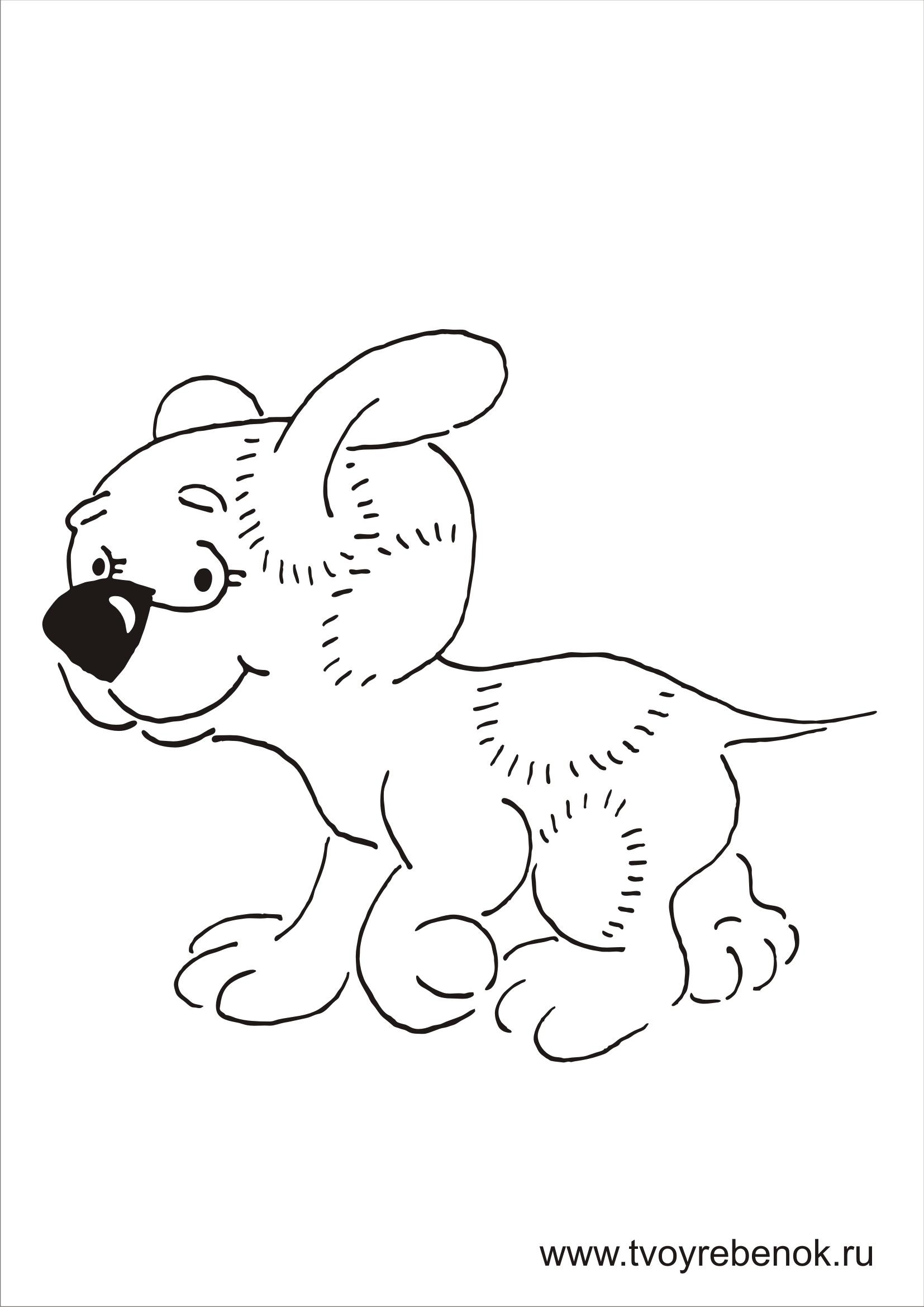 раскраски собак распечатать бесплатно красивые раскраски