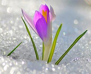 Стенгазета про весну картинки