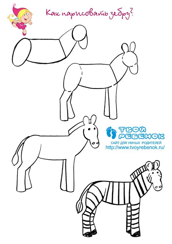 Как нарисовать раскраску животных